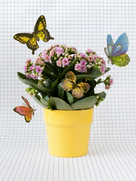 FLOWER+butterflies